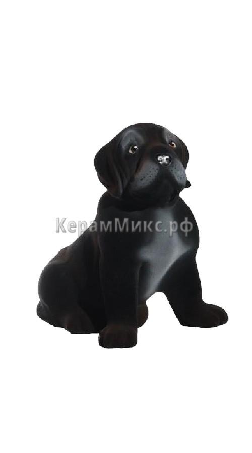 Бардос чёрный